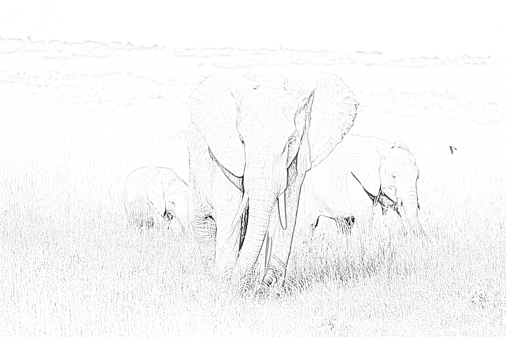 Elephants Printable Coloring Page