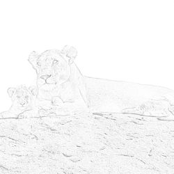 Lions on the rock - Coloring page