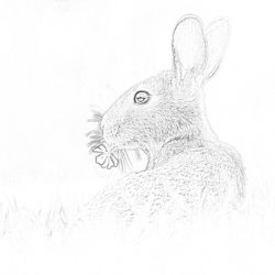 Bunny - Coloring page