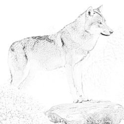 Wolf in the forest - Coloring page