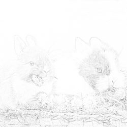 Rabbits - Coloring page