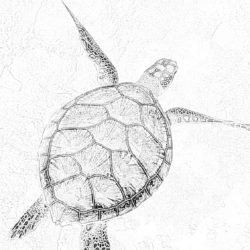 Turtle in water - Coloring page