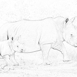White rhinoceros - Coloring page