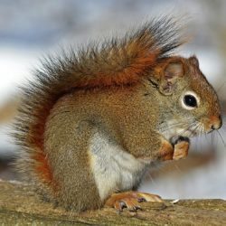 Squirrel in wood - Origin image