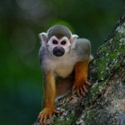 Monkey on a tree - Origin image