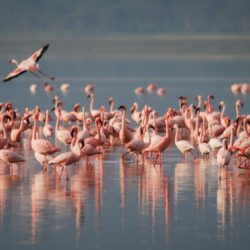 Flamingos on a lake - Origin image