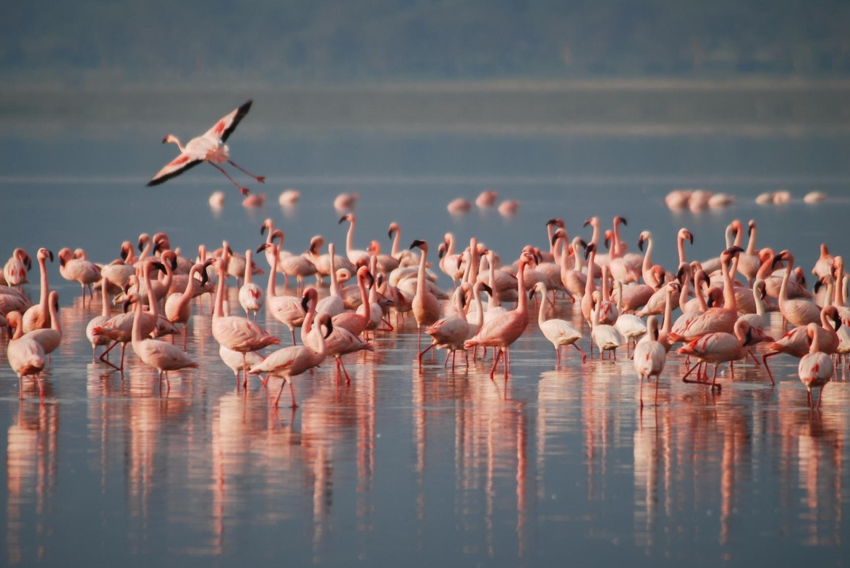 Flamingos on a lake - Original image