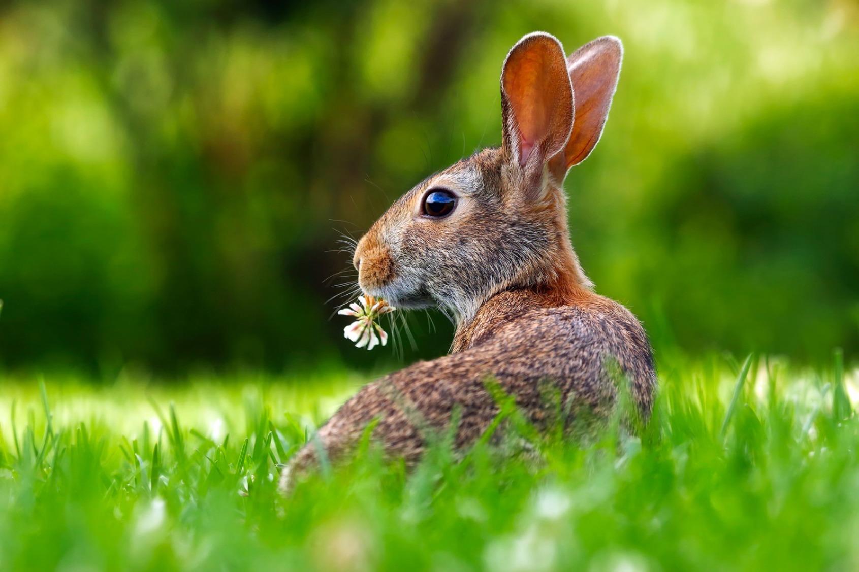 Bunny on Grass - Original image