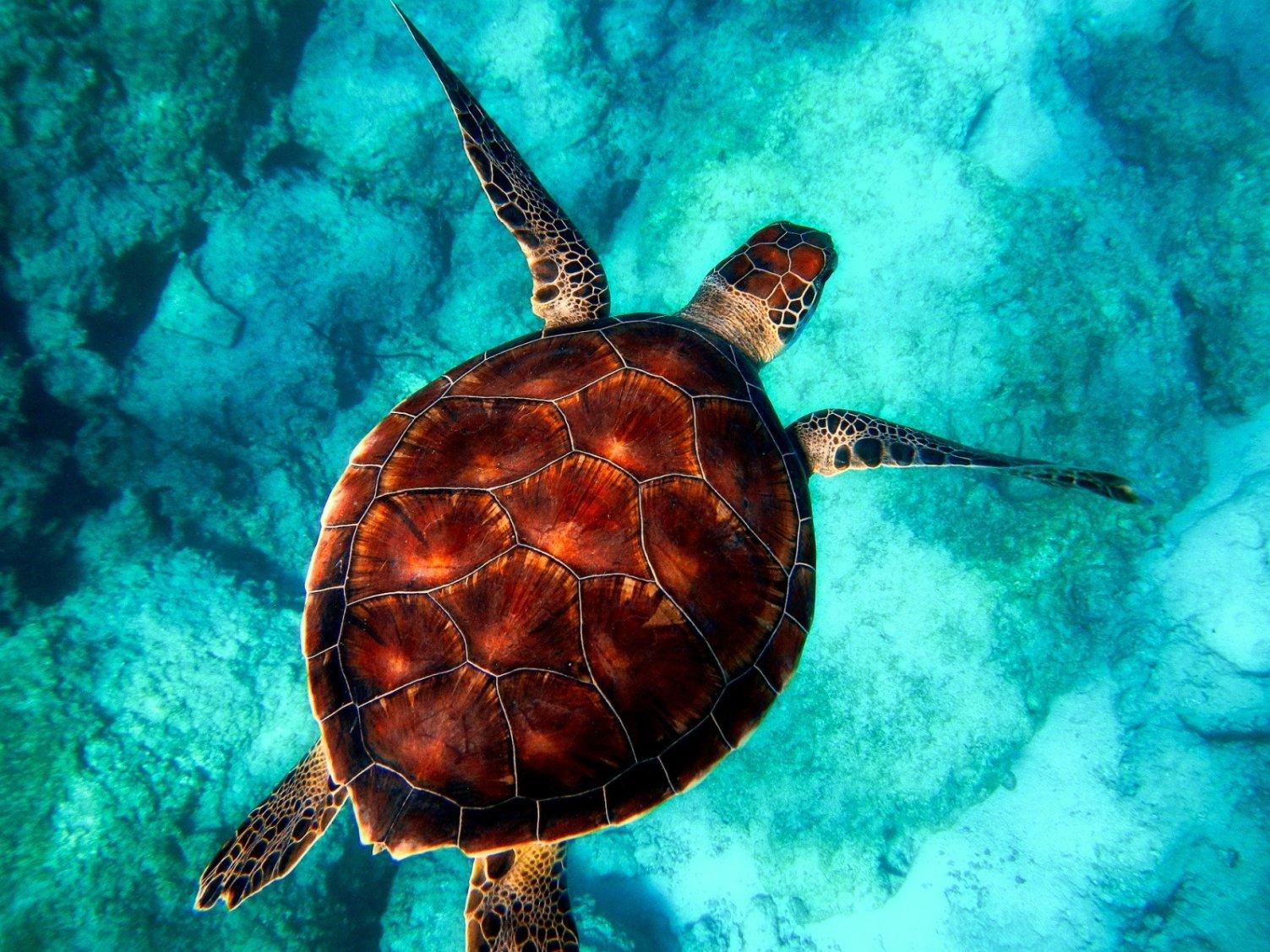 Turtle in water - Original image