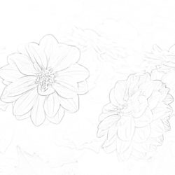 Bellflower - Coloring page