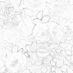 Orchids - Coloring page