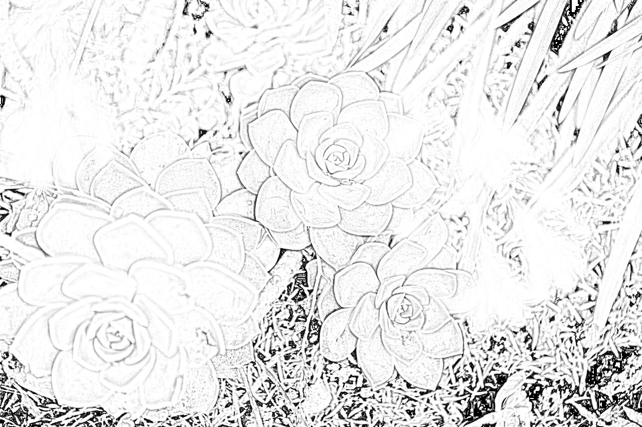 Succulents Coloring Page