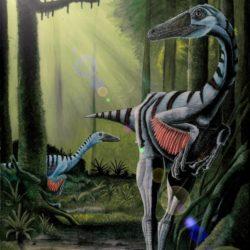 Elopteryx - Origin image