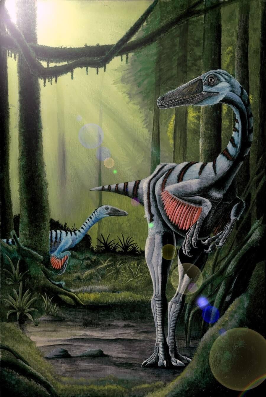 Elopteryx - Original image
