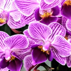 Orchids - Origin image