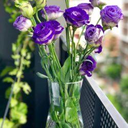 Gypsophila flowers - Origin image
