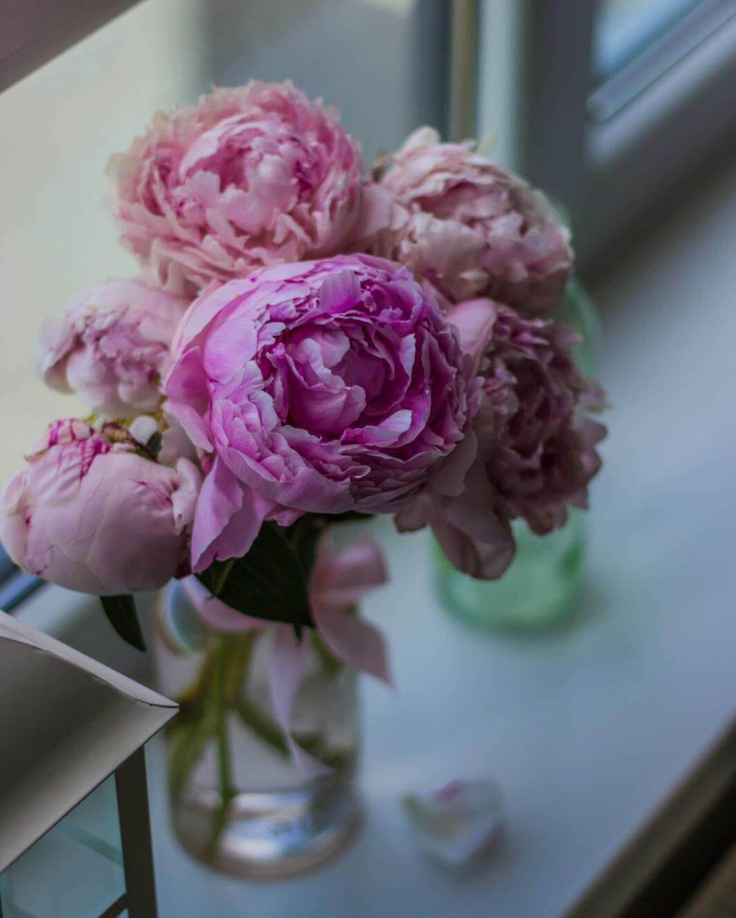 Pink Peony Flowers - Original image