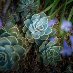 Succulents - Origin image