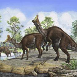 Amurosaurus - Origin image