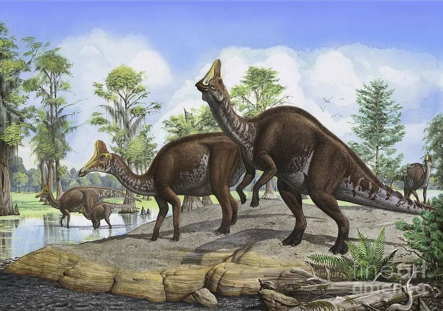 Amurosaurus - Original image