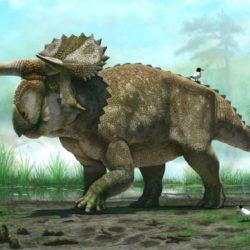 Nasutoceratops - Origin image