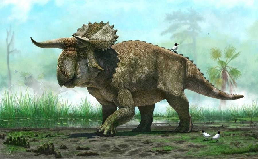 Nasutoceratops - Original image