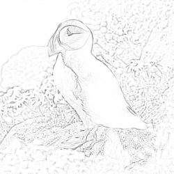Blue and yellow macaw - Coloring page