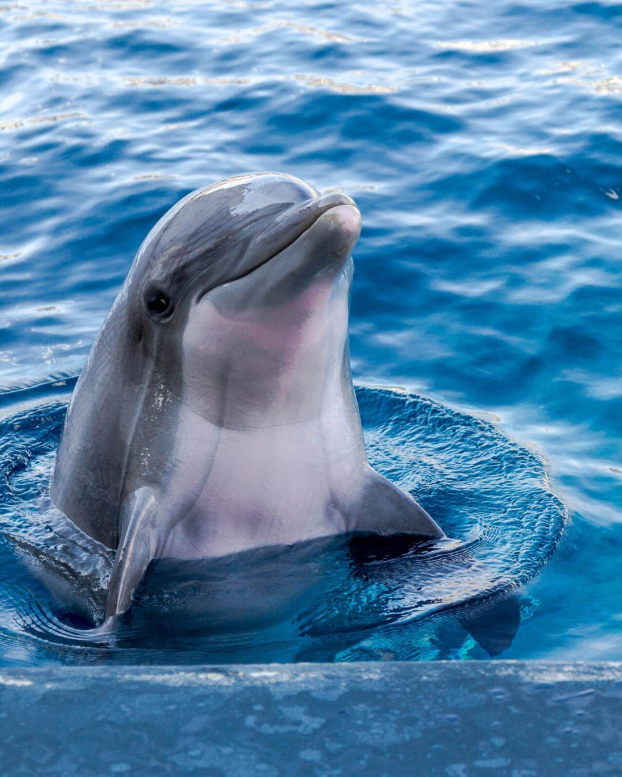 Dolphin - Original image