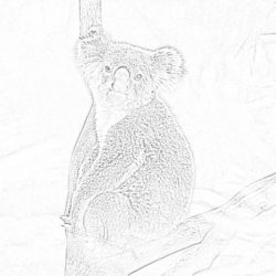 Monkey on a tree - Coloring page