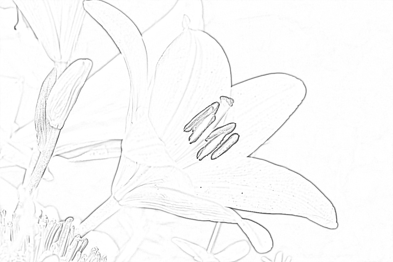Lily Coloring Page