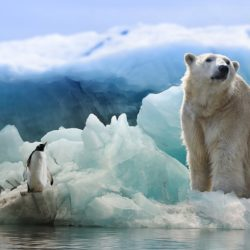 Polar Bear - Origin image