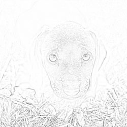 Puppy - Coloring page