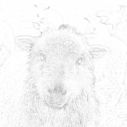 Sheep - Coloring page