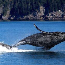Whale - Origin image