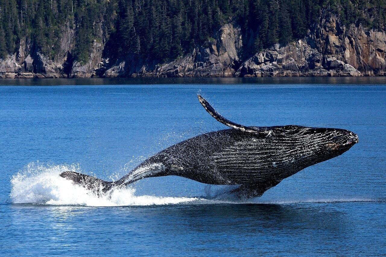 Whale - Original image