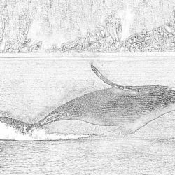 Whale - Coloring page